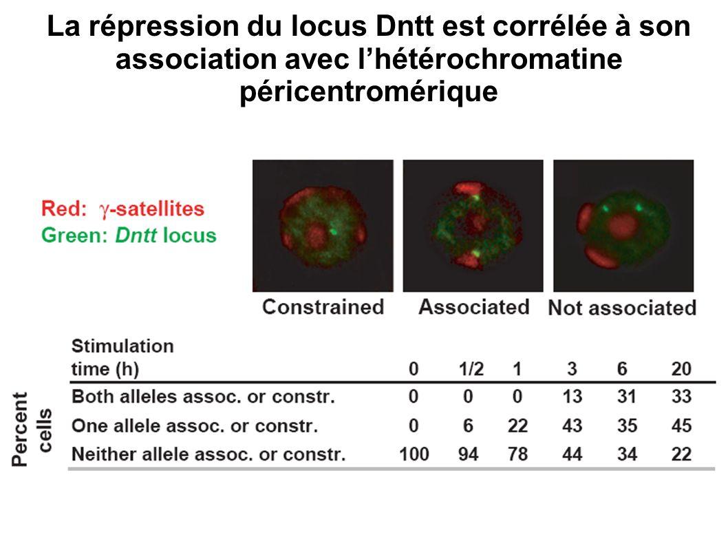 La répression du locus Dntt est corrélée à son association avec l'hétérochromatine péricentromérique
