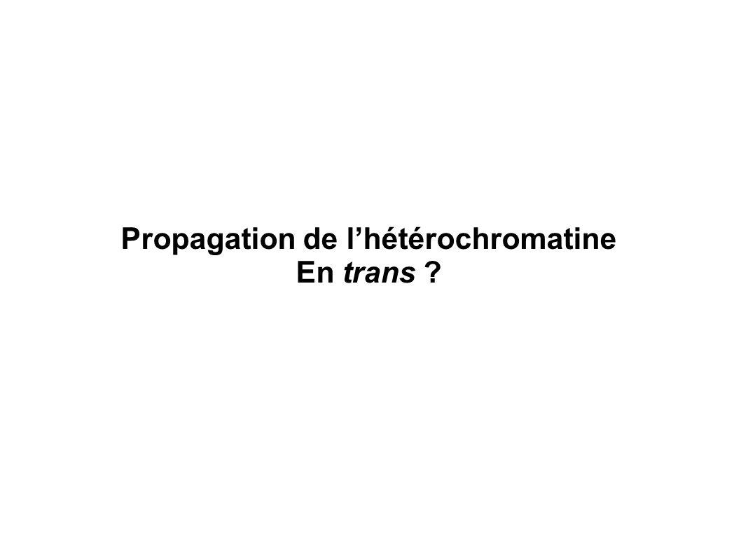 Propagation de l'hétérochromatine