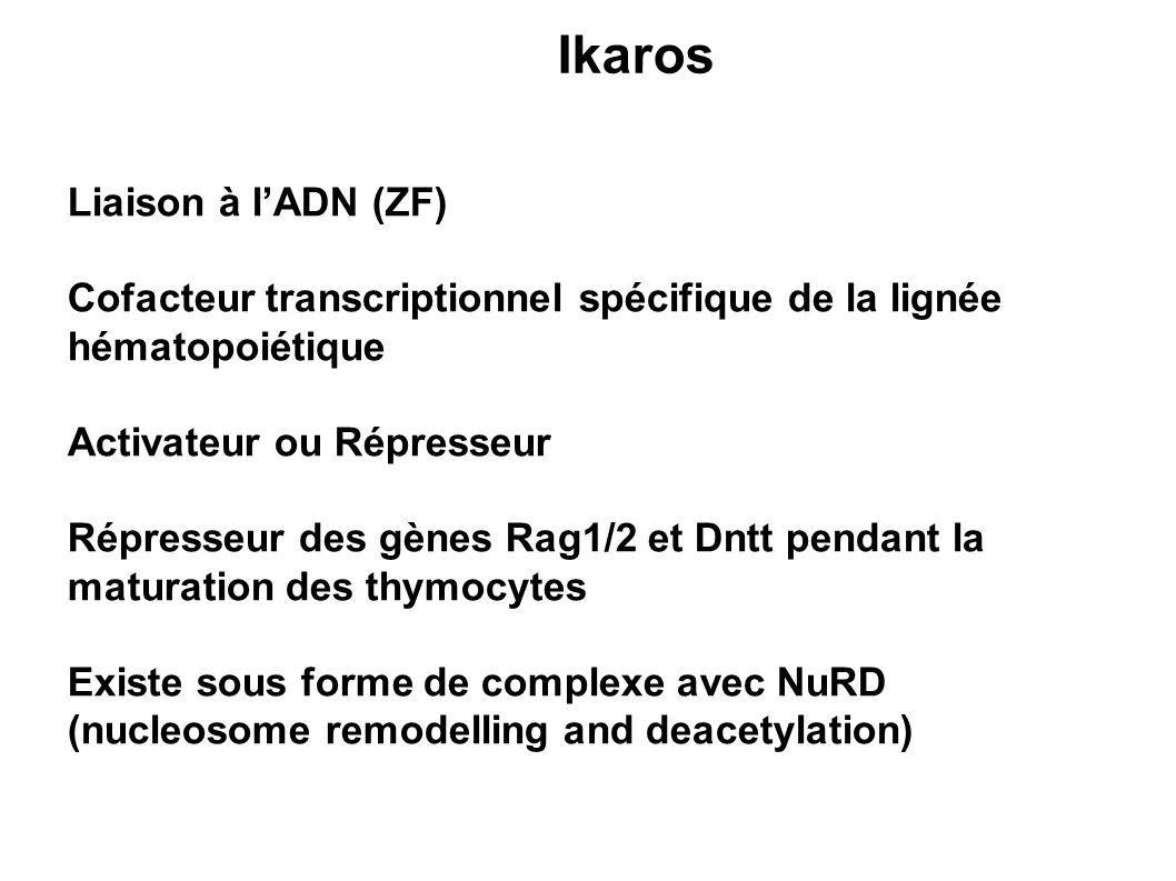 Ikaros Liaison à l'ADN (ZF)