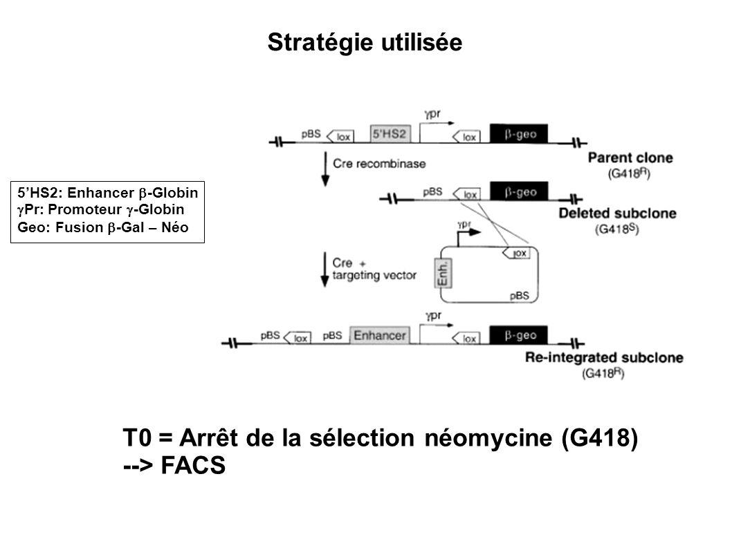 T0 = Arrêt de la sélection néomycine (G418) --> FACS