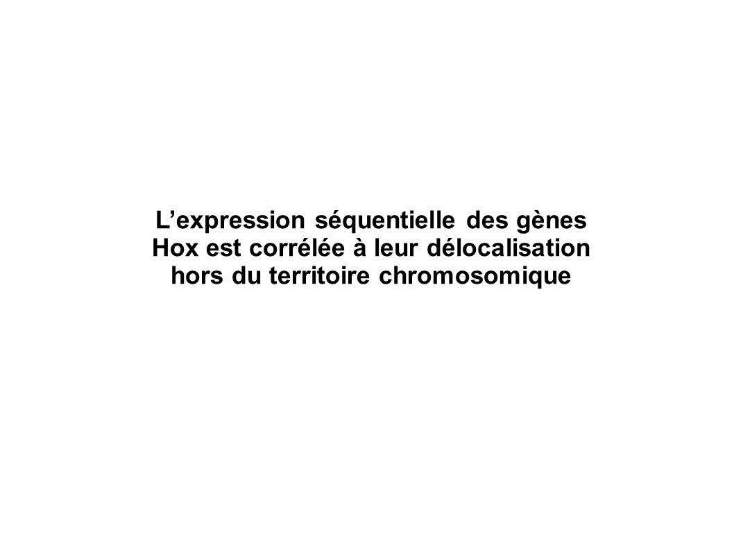 L'expression séquentielle des gènes Hox est corrélée à leur délocalisation hors du territoire chromosomique