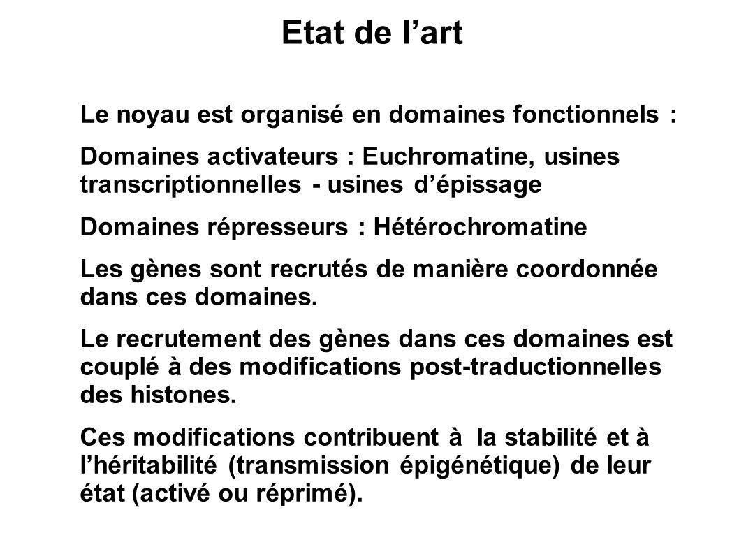 Etat de l'art Le noyau est organisé en domaines fonctionnels :