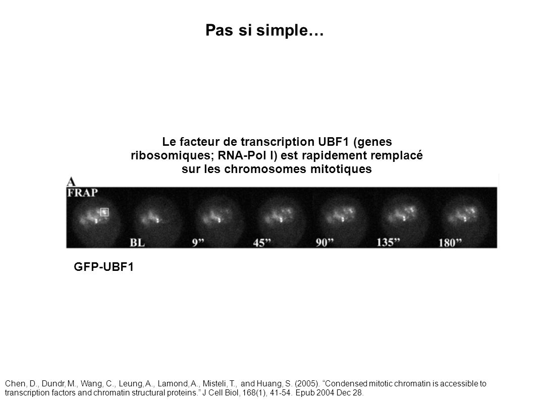 Pas si simple… Le facteur de transcription UBF1 (genes ribosomiques; RNA-Pol I) est rapidement remplacé sur les chromosomes mitotiques.