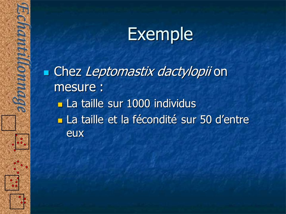 Exemple Chez Leptomastix dactylopii on mesure :