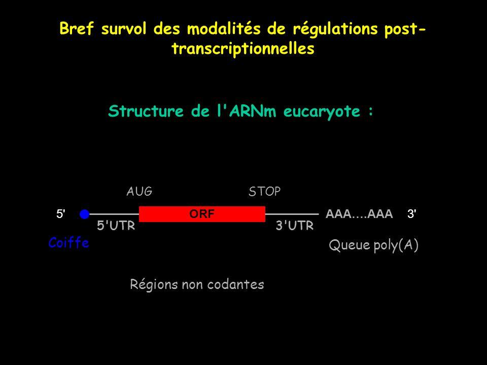 Bref survol des modalités de régulations post-transcriptionnelles