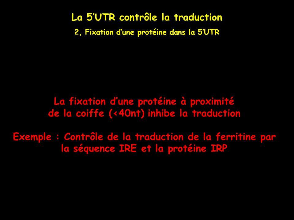 La 5'UTR contrôle la traduction