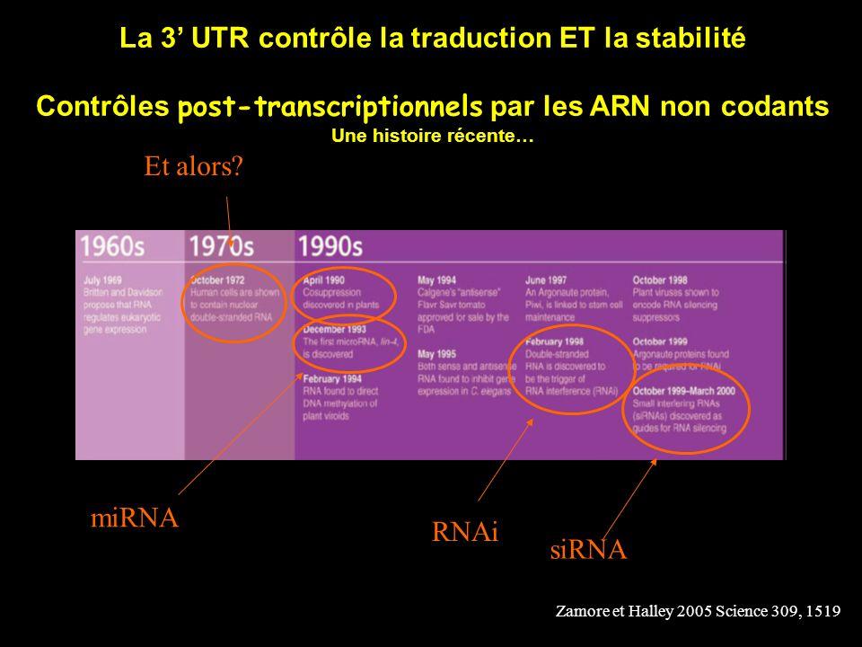 La 3' UTR contrôle la traduction ET la stabilité