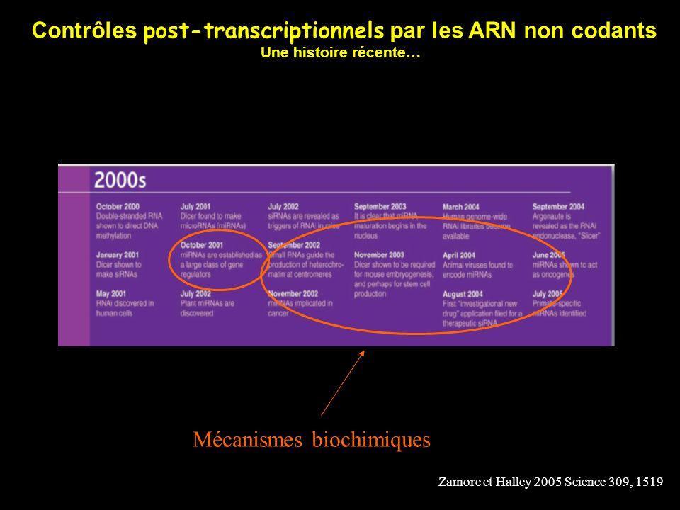 Contrôles post-transcriptionnels par les ARN non codants