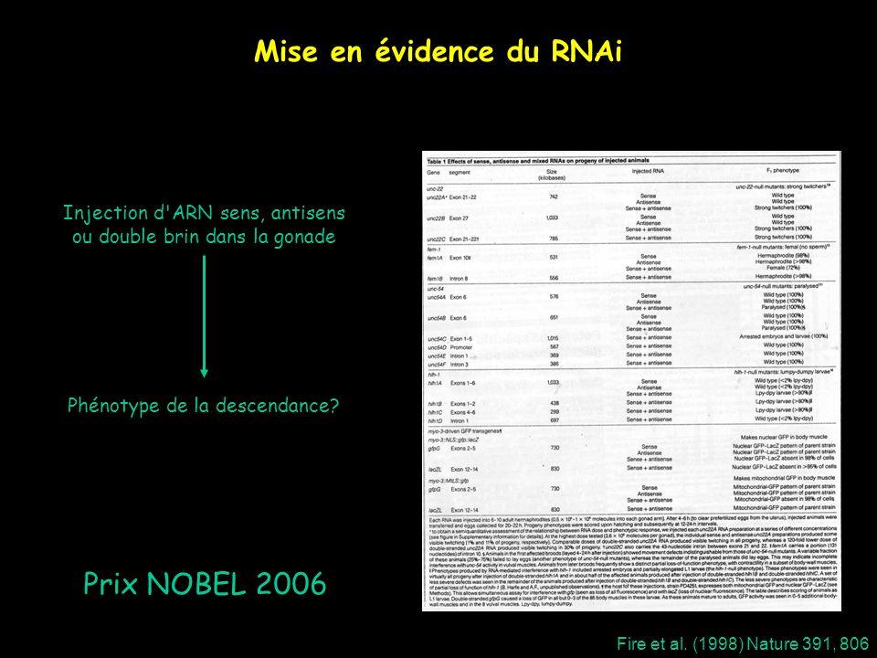 Mise en évidence du RNAi