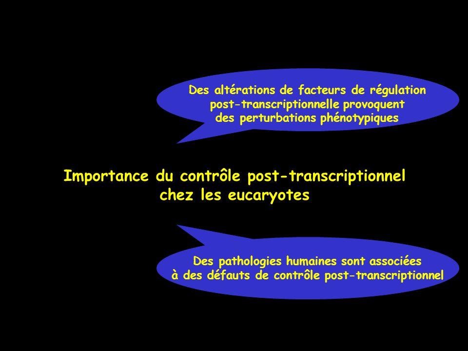 Importance du contrôle post-transcriptionnel chez les eucaryotes