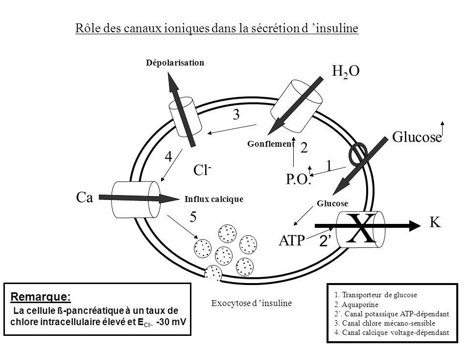 X H2O 3 Glucose 2 4 1 Cl- P.O. Ca 5 K ATP 2'