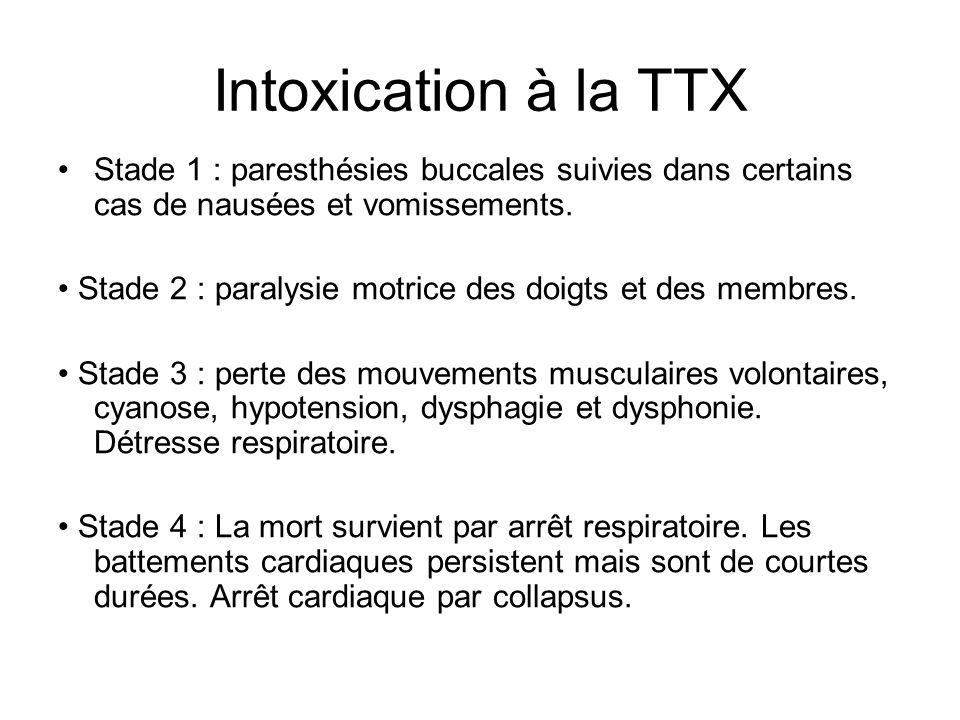 Intoxication à la TTX Stade 1 : paresthésies buccales suivies dans certains cas de nausées et vomissements.