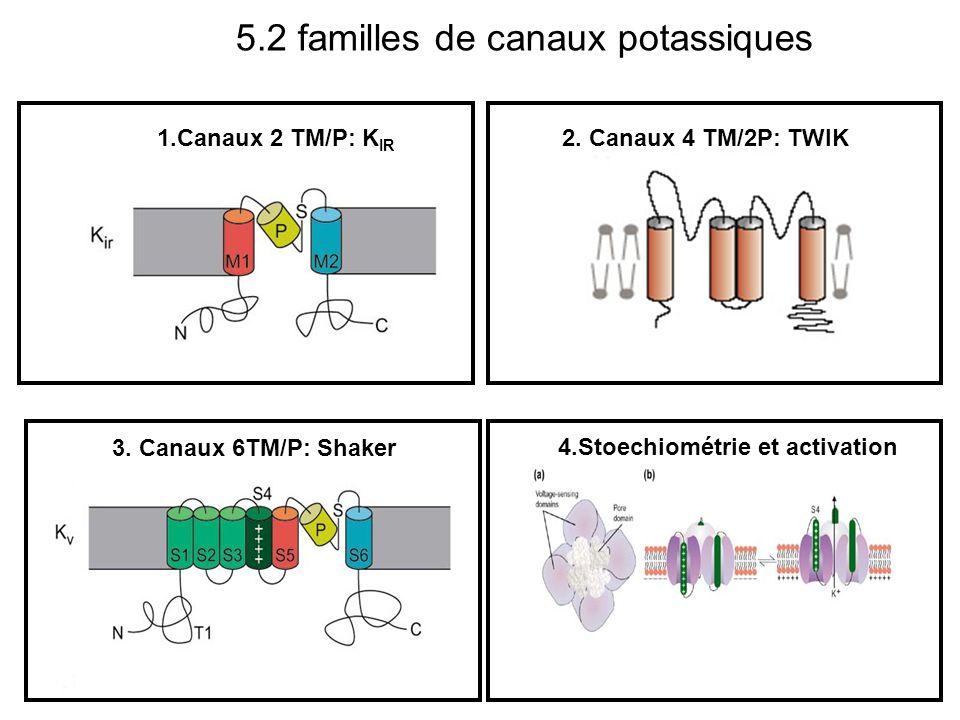 5.2 familles de canaux potassiques