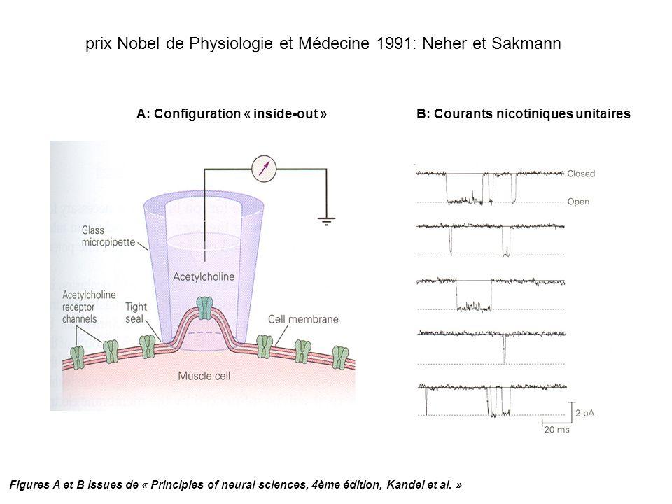 prix Nobel de Physiologie et Médecine 1991: Neher et Sakmann