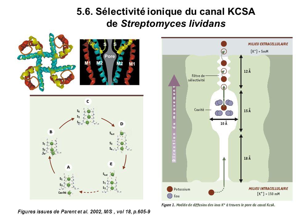 5.6. Sélectivité ionique du canal KCSA de Streptomyces lividans