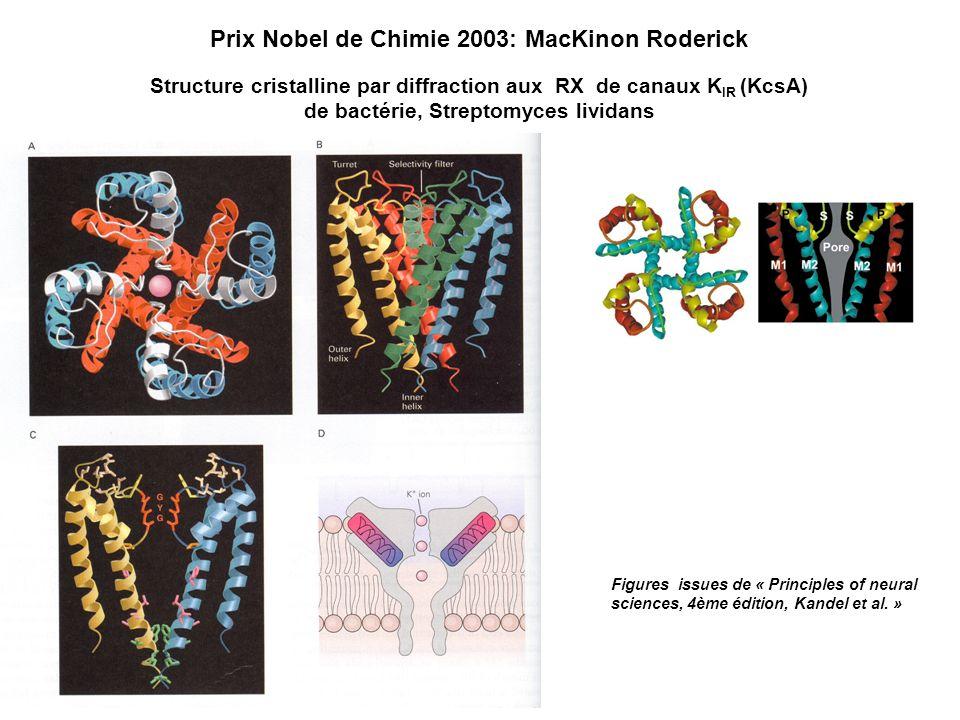 Prix Nobel de Chimie 2003: MacKinon Roderick