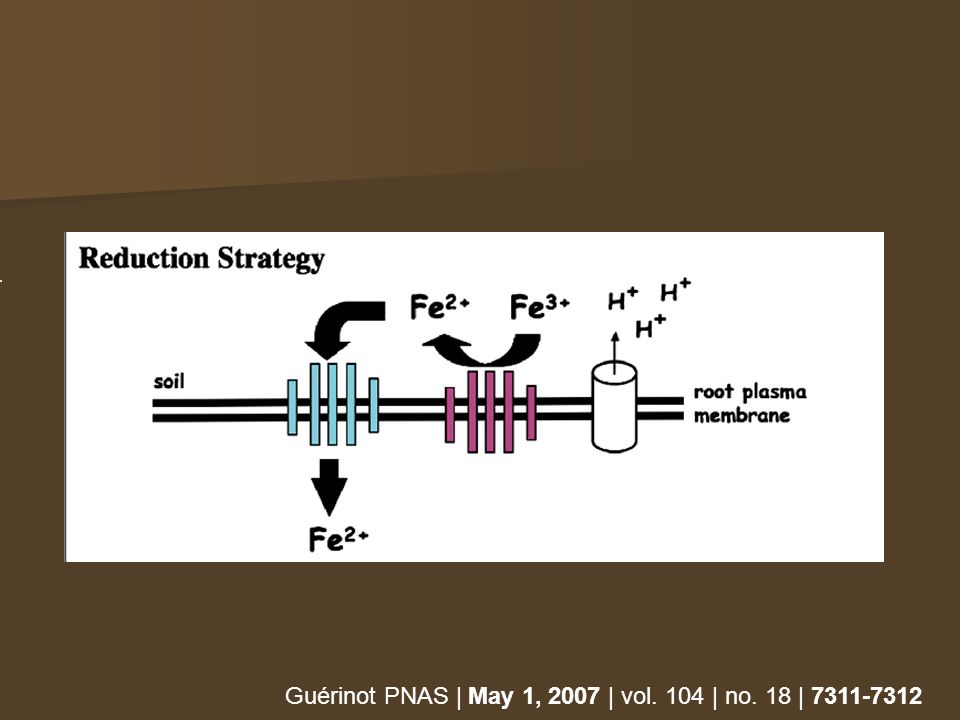 Guérinot PNAS | May 1, 2007 | vol. 104 | no. 18 | 7311-7312