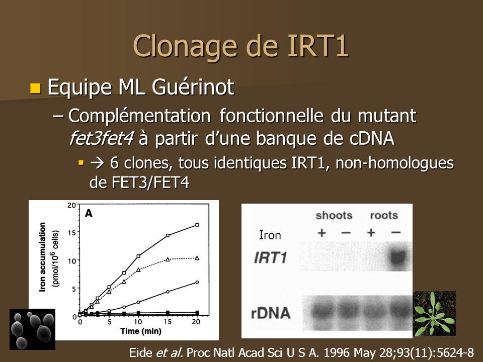 Clonage de IRT1 Equipe ML Guérinot