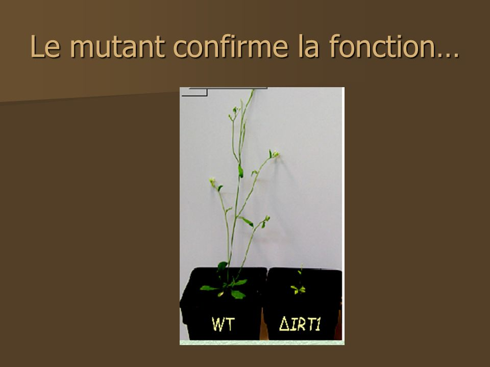 Le mutant confirme la fonction…
