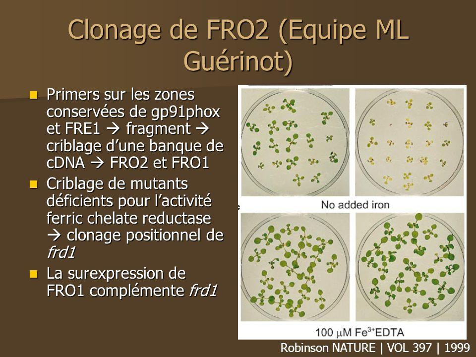 Clonage de FRO2 (Equipe ML Guérinot)