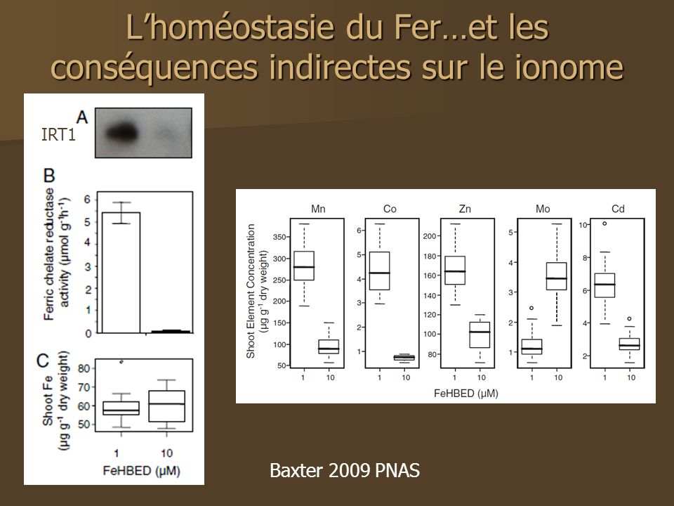 L'homéostasie du Fer…et les conséquences indirectes sur le ionome