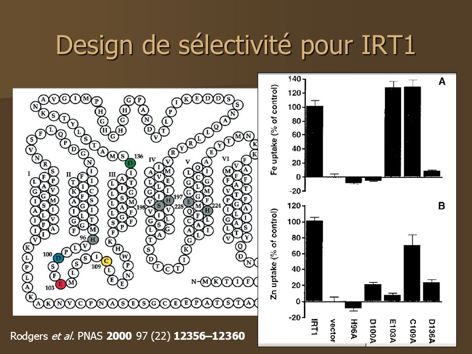 Design de sélectivité pour IRT1