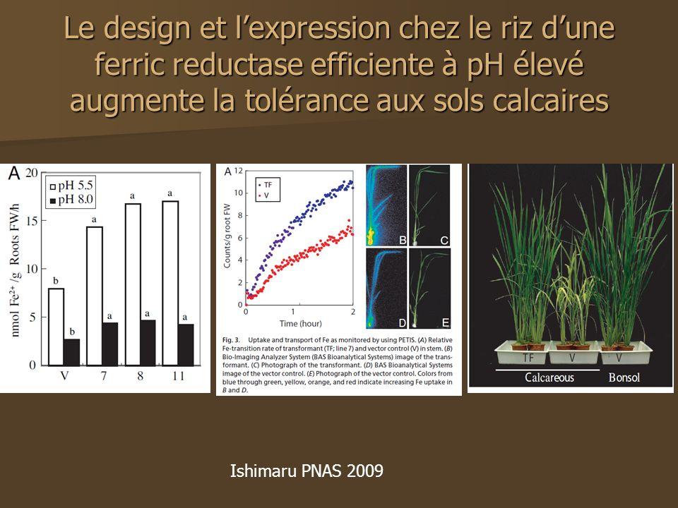 Le design et l'expression chez le riz d'une ferric reductase efficiente à pH élevé augmente la tolérance aux sols calcaires