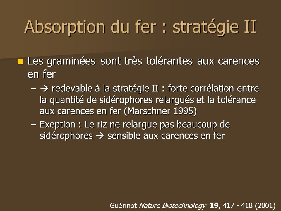 Absorption du fer : stratégie II