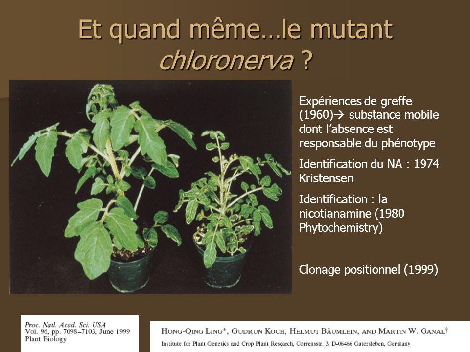 Et quand même…le mutant chloronerva