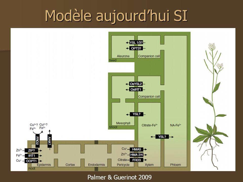 Modèle aujourd'hui SI Palmer & Guerinot 2009