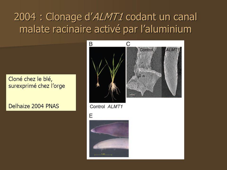 2004 : Clonage d'ALMT1 codant un canal malate racinaire activé par l'aluminium