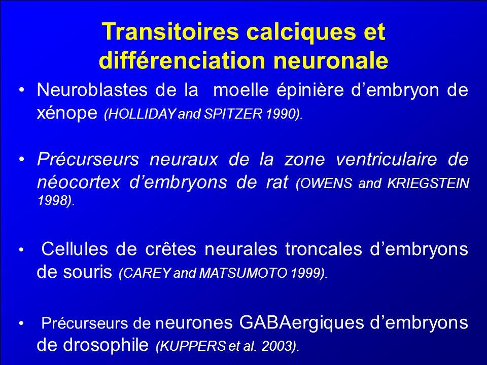 Transitoires calciques et différenciation neuronale