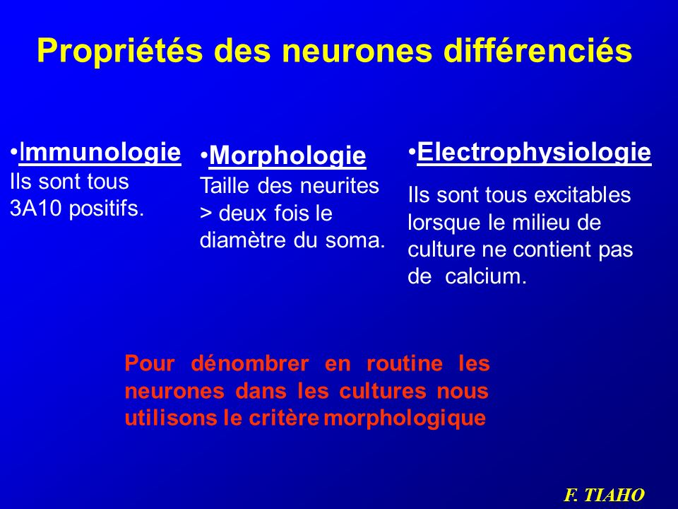 Propriétés des neurones différenciés