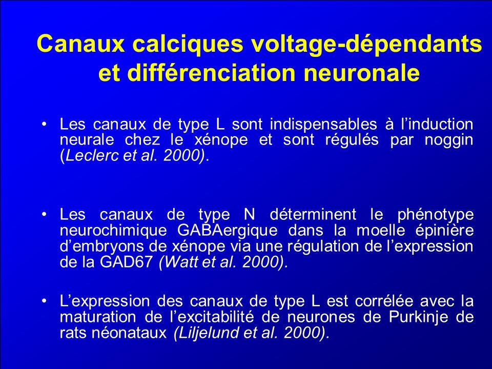 Canaux calciques voltage-dépendants et différenciation neuronale