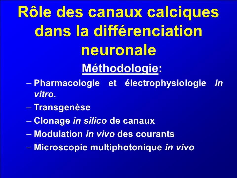 Rôle des canaux calciques dans la différenciation neuronale