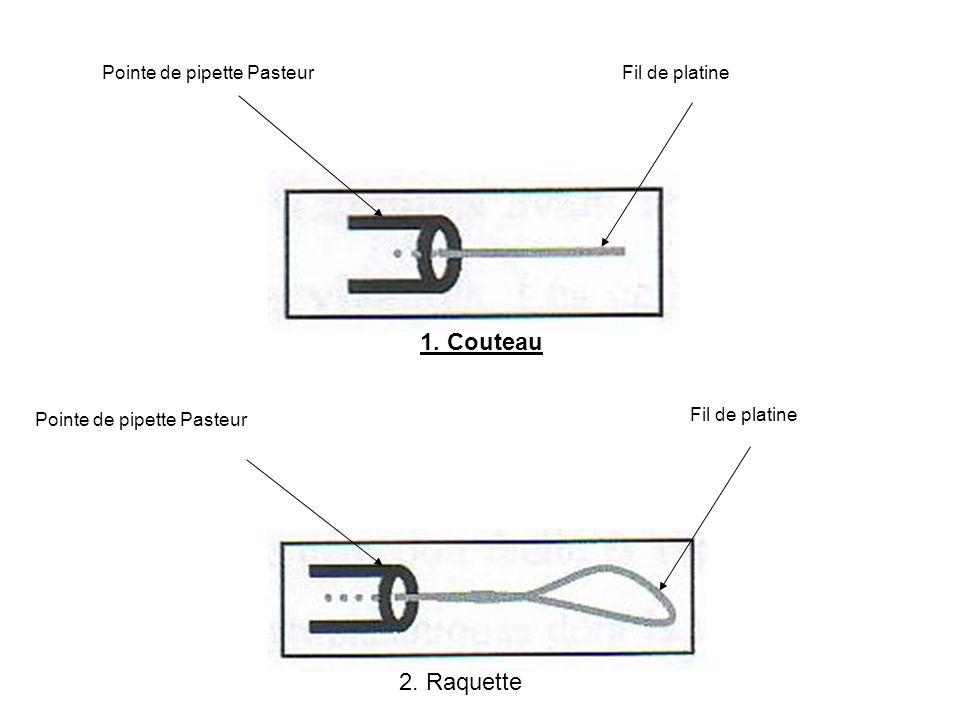 1. Couteau 2. Raquette Pointe de pipette Pasteur Fil de platine