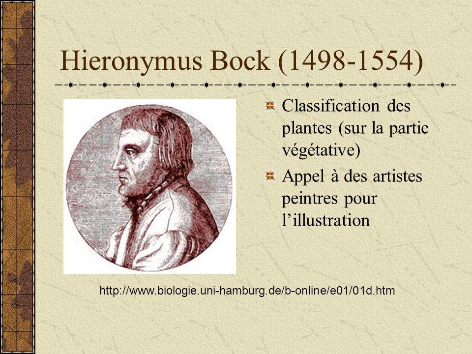 Hieronymus Bock (1498-1554) Classification des plantes (sur la partie végétative) Appel à des artistes peintres pour l'illustration.