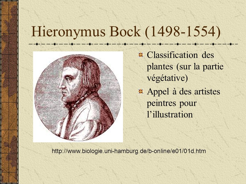 Hieronymus Bock (1498-1554)Classification des plantes (sur la partie végétative) Appel à des artistes peintres pour l'illustration.