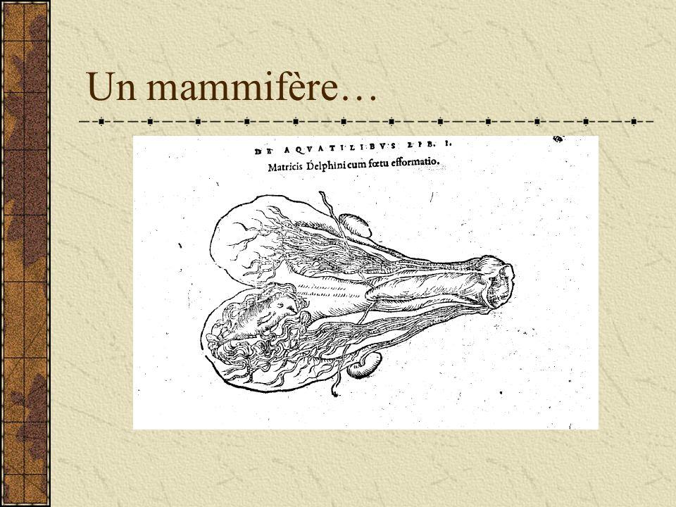 Un mammifère…