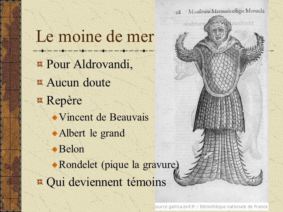 Le moine de mer Pour Aldrovandi, Aucun doute Repère