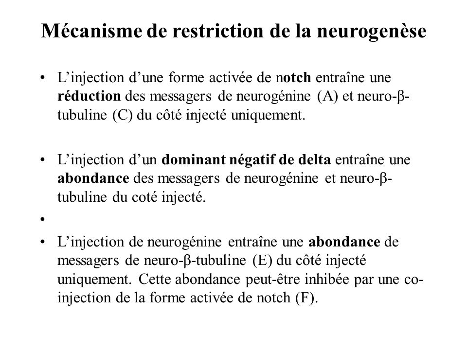 Mécanisme de restriction de la neurogenèse