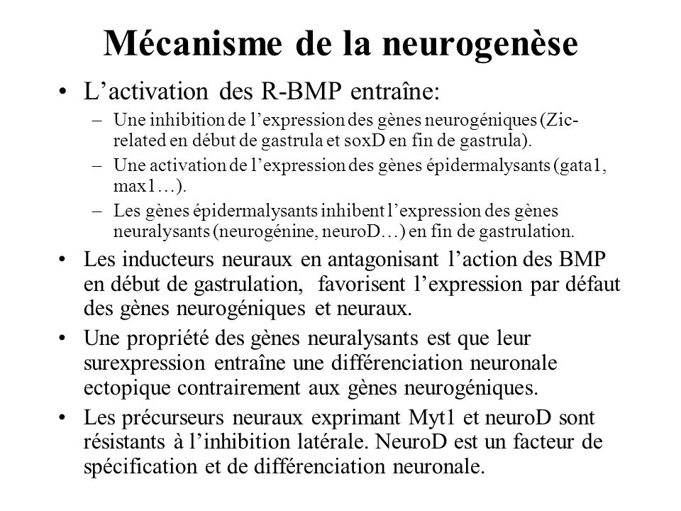 Mécanisme de la neurogenèse