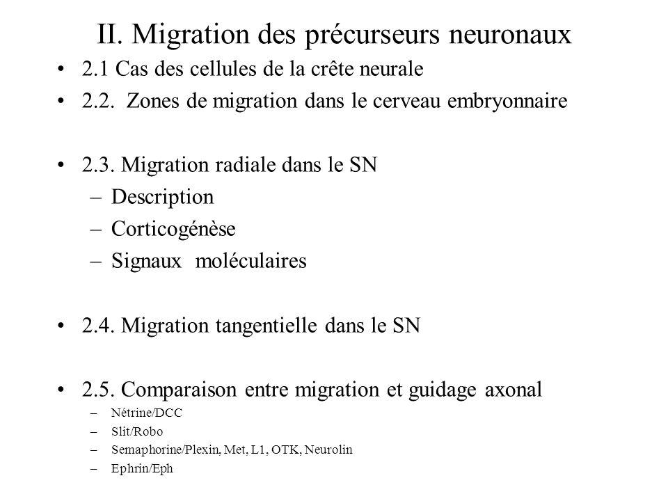 II. Migration des précurseurs neuronaux