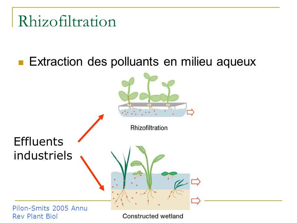 Rhizofiltration Extraction des polluants en milieu aqueux