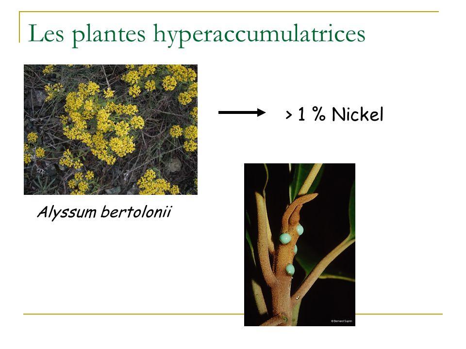 Les plantes hyperaccumulatrices