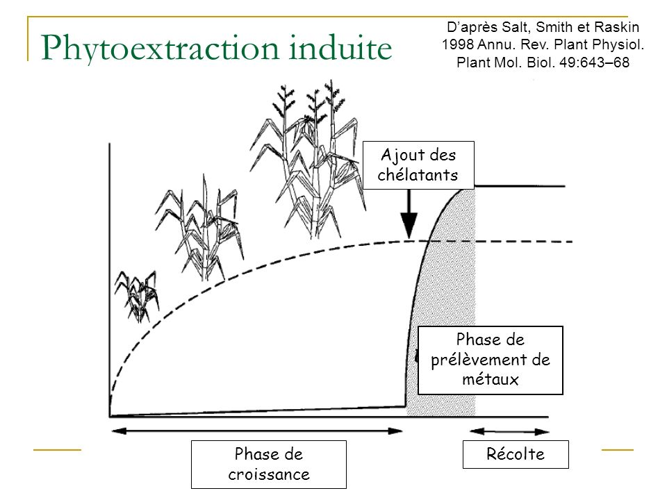 Phytoextraction induite