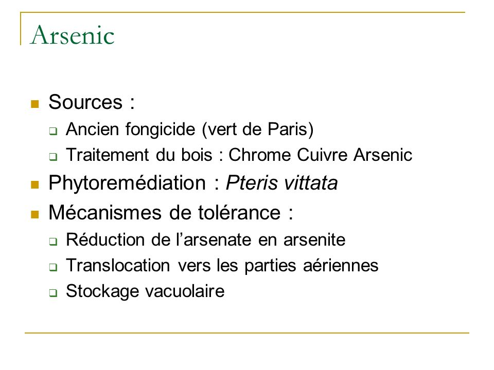 Arsenic Sources : Phytoremédiation : Pteris vittata