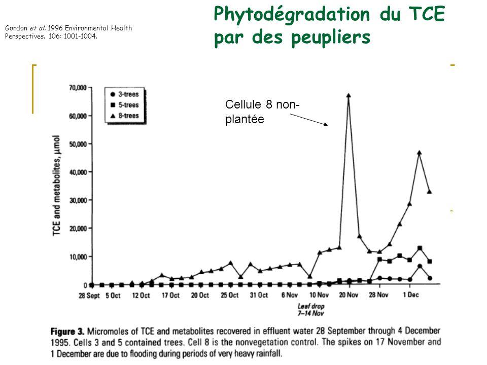 Phytodégradation du TCE par des peupliers