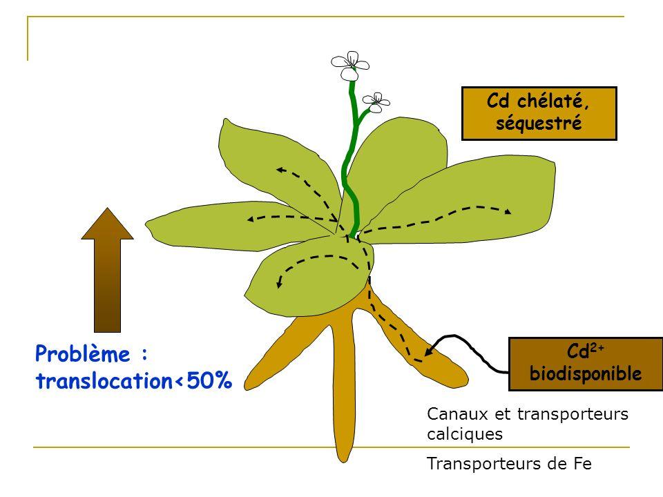 Problème : translocation<50%