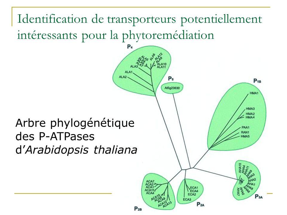 Identification de transporteurs potentiellement intéressants pour la phytoremédiation